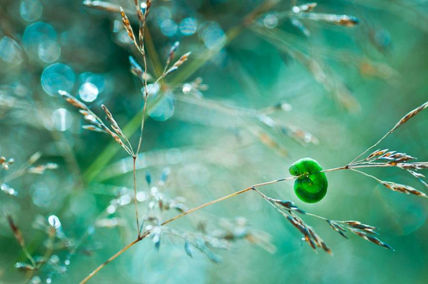 fotografia-macro-natura-piante-insetti-magda-wasiczek-02