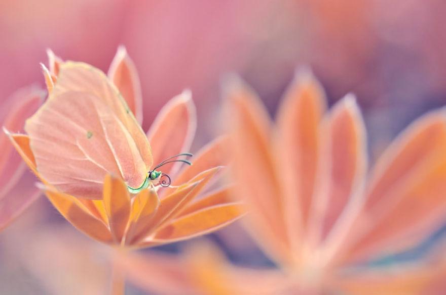 fotografia-macro-natura-piante-insetti-magda-wasiczek-03