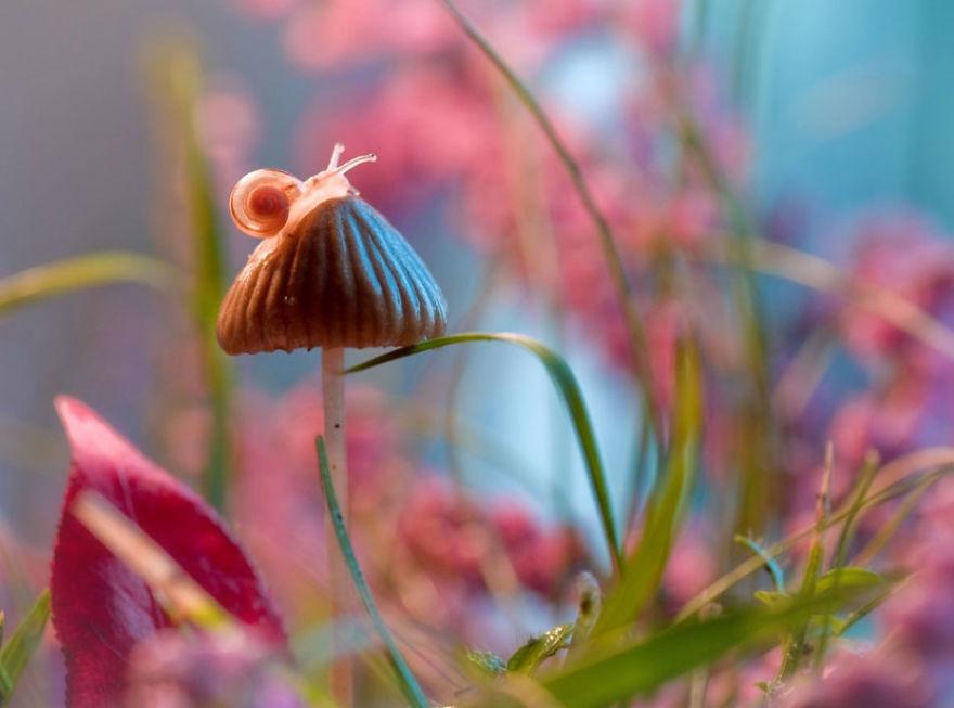 fotografia-macro-natura-piante-insetti-magda-wasiczek-04