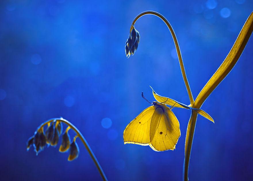 fotografia-macro-natura-piante-insetti-magda-wasiczek-06