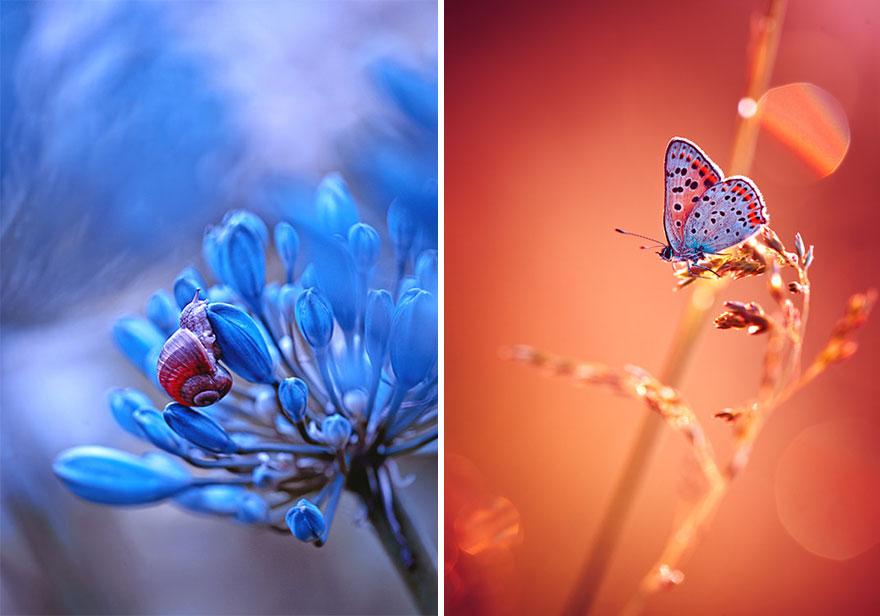 fotografia-macro-natura-piante-insetti-magda-wasiczek-07