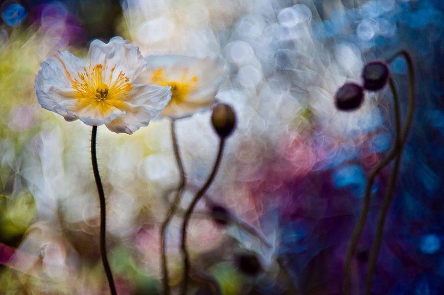 fotografia-macro-natura-piante-insetti-magda-wasiczek-08