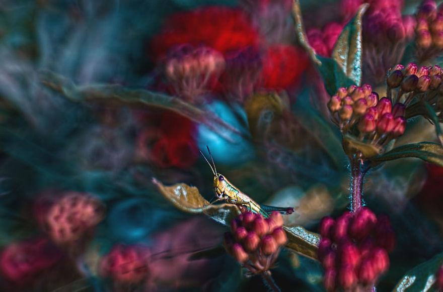 fotografia-macro-natura-piante-insetti-magda-wasiczek-16
