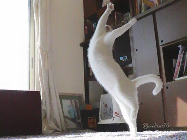 gatto-balla-balletto-giappone-1