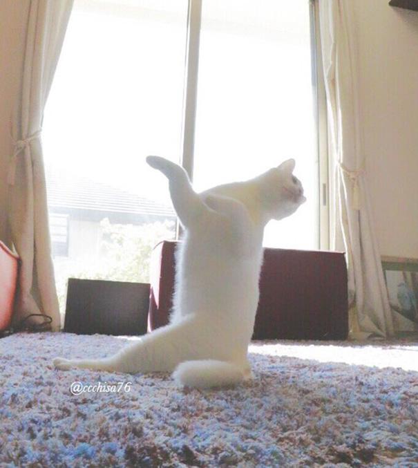 gatto-balla-balletto-giappone-2