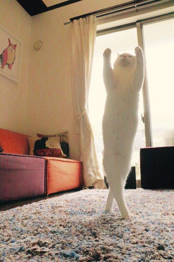 gatto-balla-balletto-giappone-3