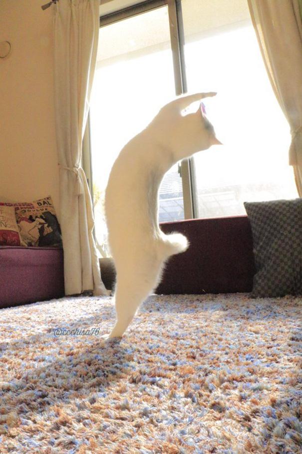 gatto-balla-balletto-giappone-4