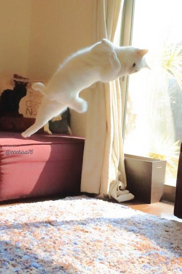 gatto-balla-balletto-giappone-5