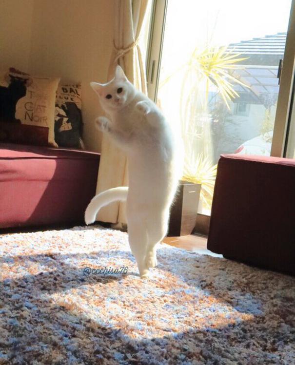gatto-balla-balletto-giappone-6