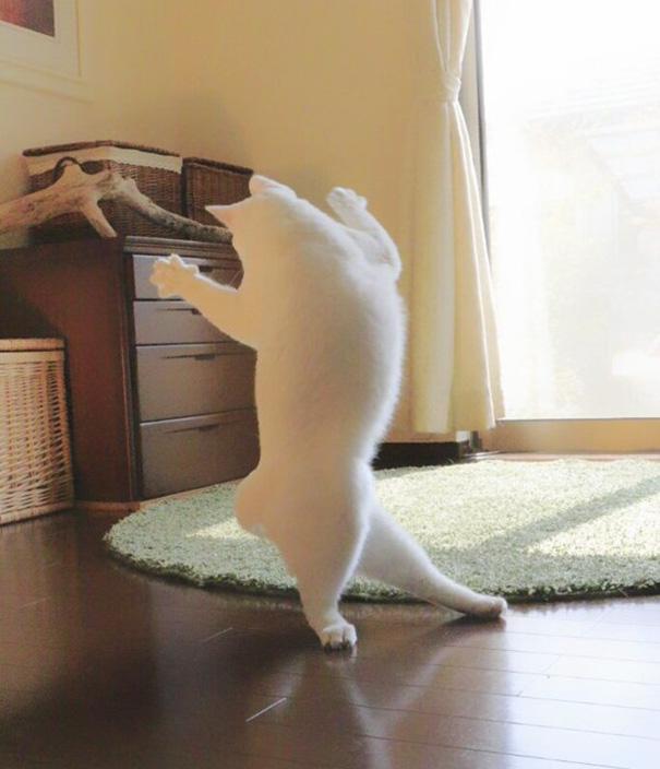 gatto-balla-balletto-giappone-8