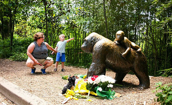 gorilla-ucciso-harambe-zoo-cincinnati-3