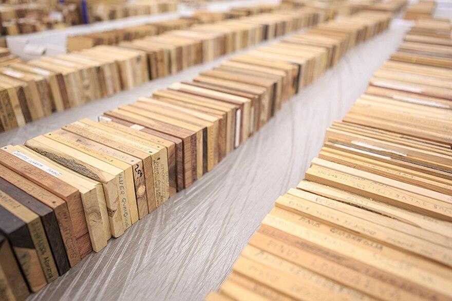 installazione-10000-alberi-bristol-katie-paterson-hollow-14
