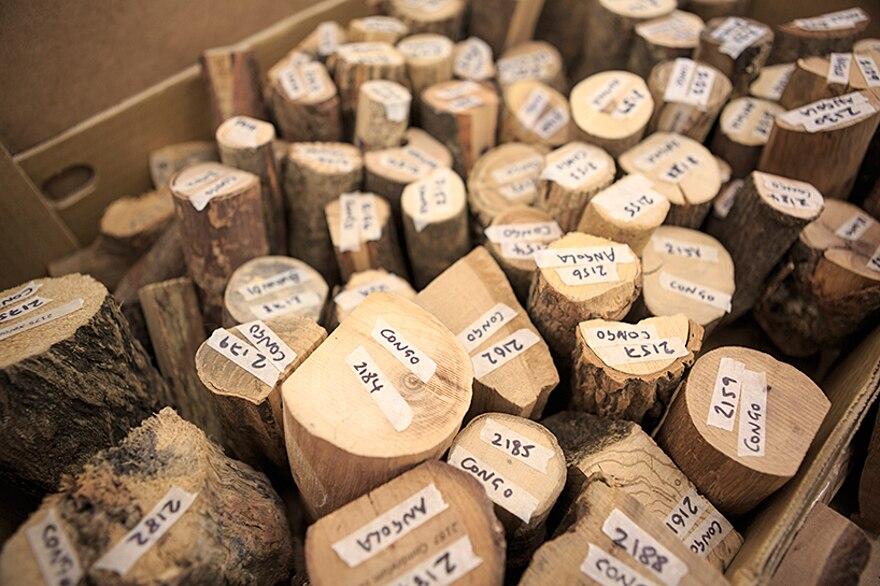 installazione-10000-alberi-bristol-katie-paterson-hollow-17