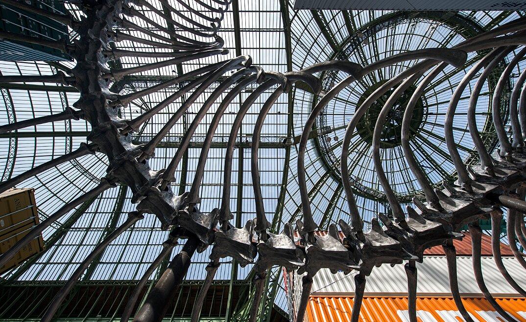 installazione-scheletro-serpente-empires-huang-yong-ping-monumenta-parigi-01