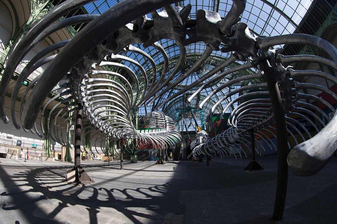 installazione-scheletro-serpente-empires-huang-yong-ping-monumenta-parigi-12