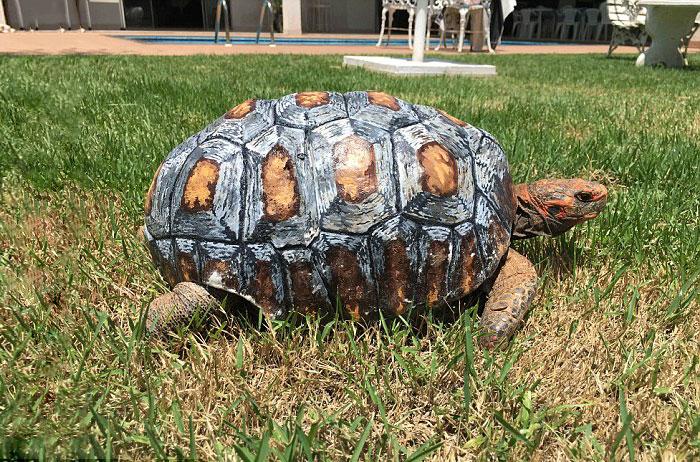 tartaruga-ferita-riceve-primo-carapace-stampato-3D-the-animal-avengers-5
