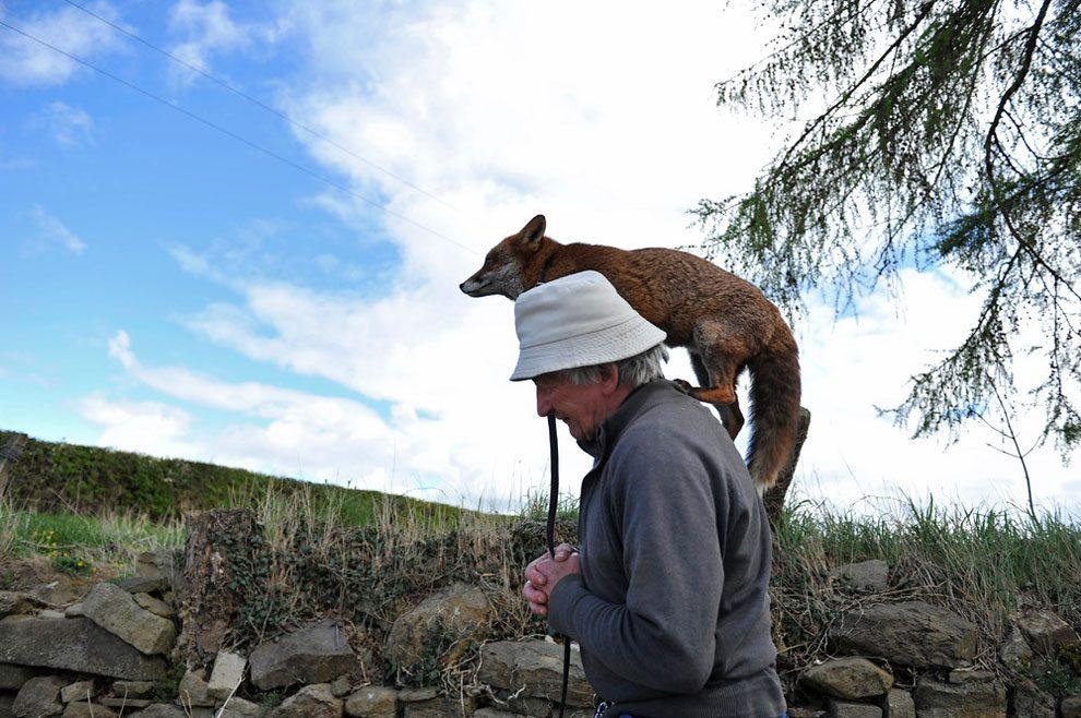 uomo-salva-volpi-amicizia-patsy-gibbons-grainne-minnie-04