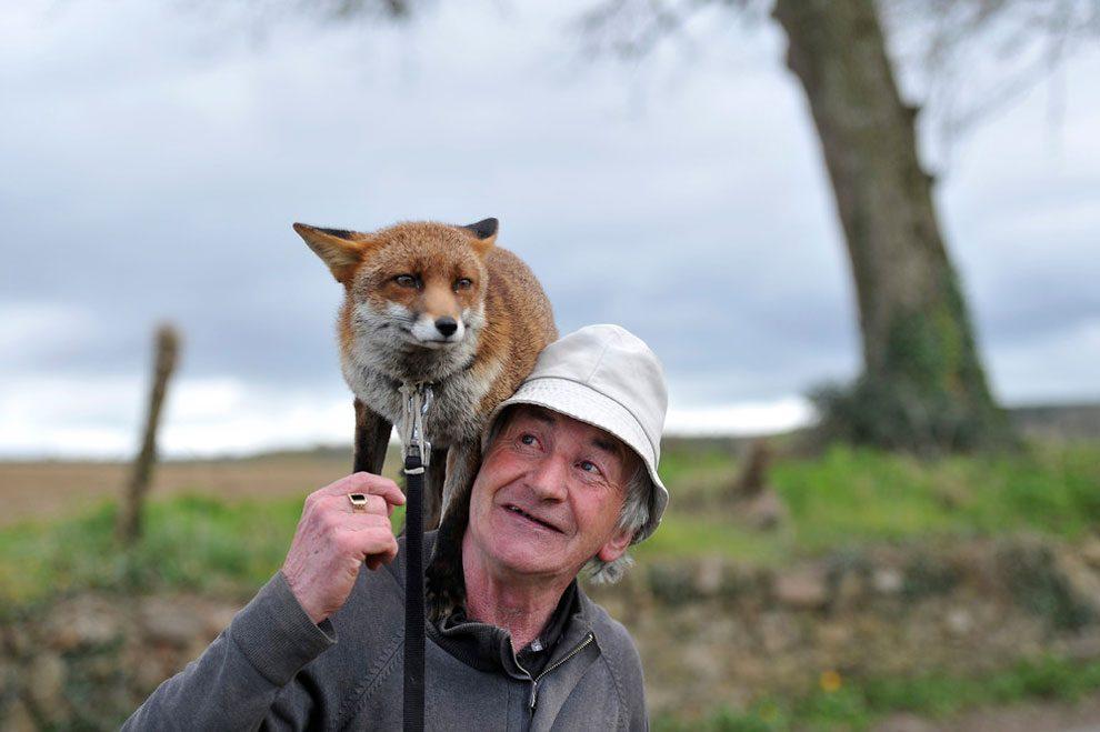 uomo-salva-volpi-amicizia-patsy-gibbons-grainne-minnie-06