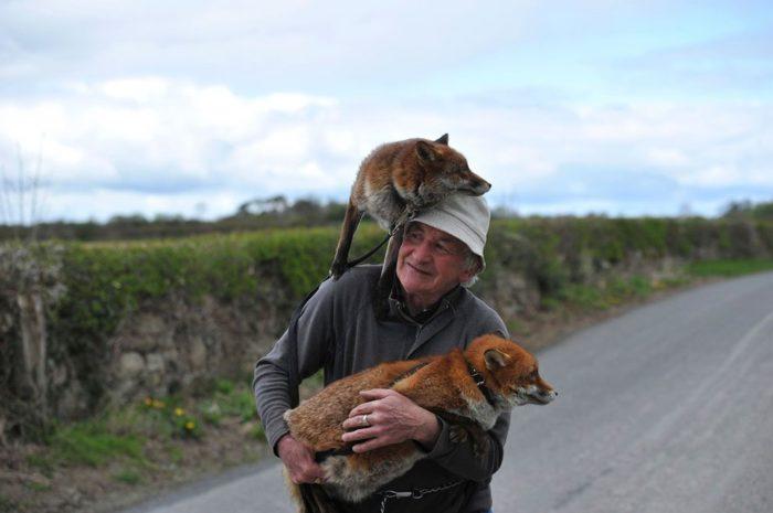 Foto di volpi keblog for Dove vive la volpe
