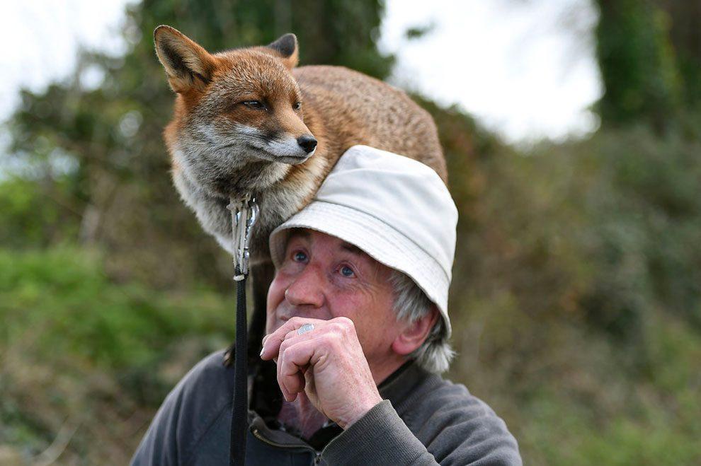 uomo-salva-volpi-amicizia-patsy-gibbons-grainne-minnie-09
