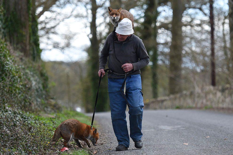 uomo-salva-volpi-amicizia-patsy-gibbons-grainne-minnie-10