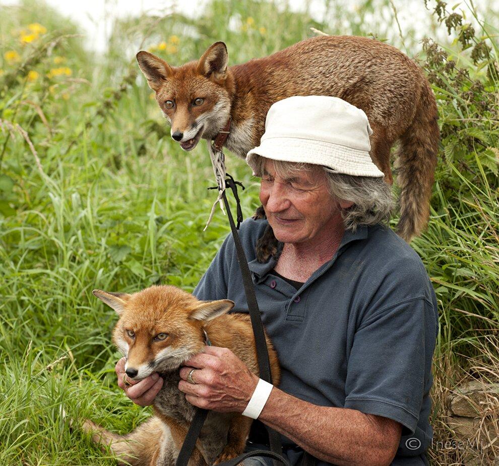 uomo-salva-volpi-amicizia-patsy-gibbons-grainne-minnie-21