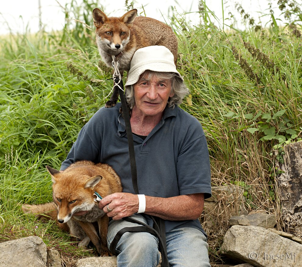 uomo-salva-volpi-amicizia-patsy-gibbons-grainne-minnie-24