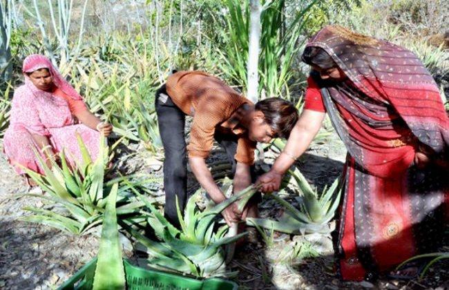 villaggio-india-piantano-111-alberi-ogni-bambina-nata-piplantri-6