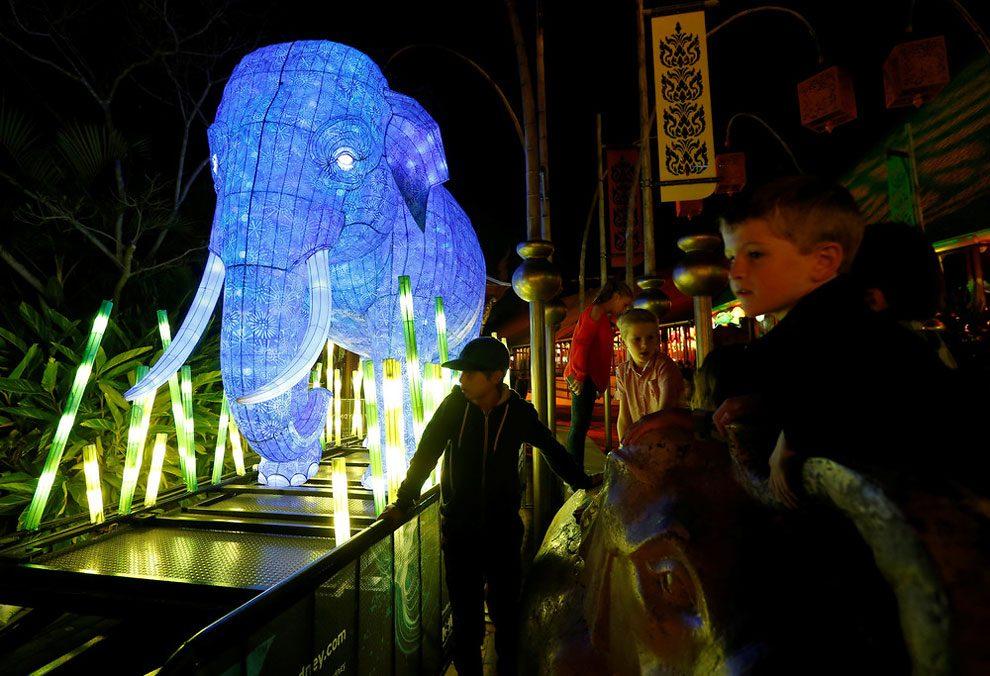 vivid-sidney-festival-luci-musica-sculture-animali-giganti-2
