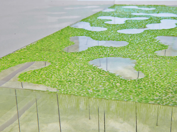 waterscape-acquario-capovolto-alghe-piante-pesci-haruka-misawa-2