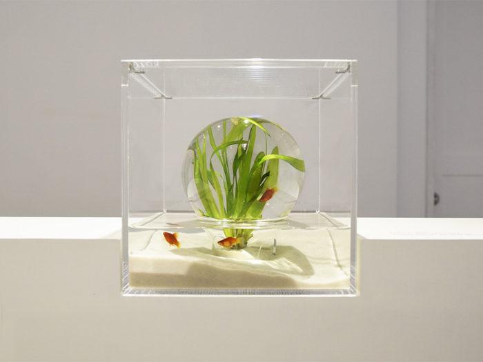 waterscape-acquario-capovolto-alghe-piante-pesci-haruka-misawa-3