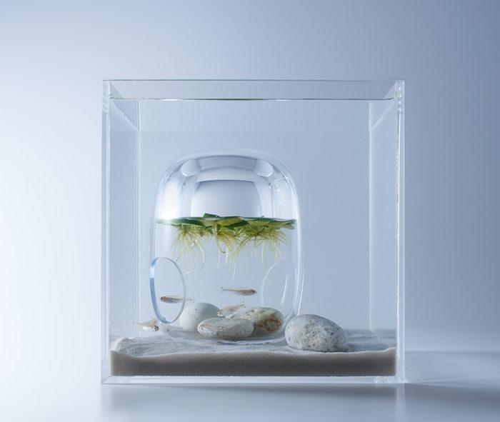 waterscape-acquario-capovolto-alghe-piante-pesci-haruka-misawa-6