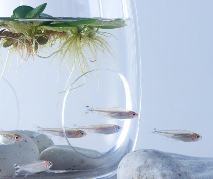 waterscape-acquario-capovolto-alghe-piante-pesci-haruka-misawa-7