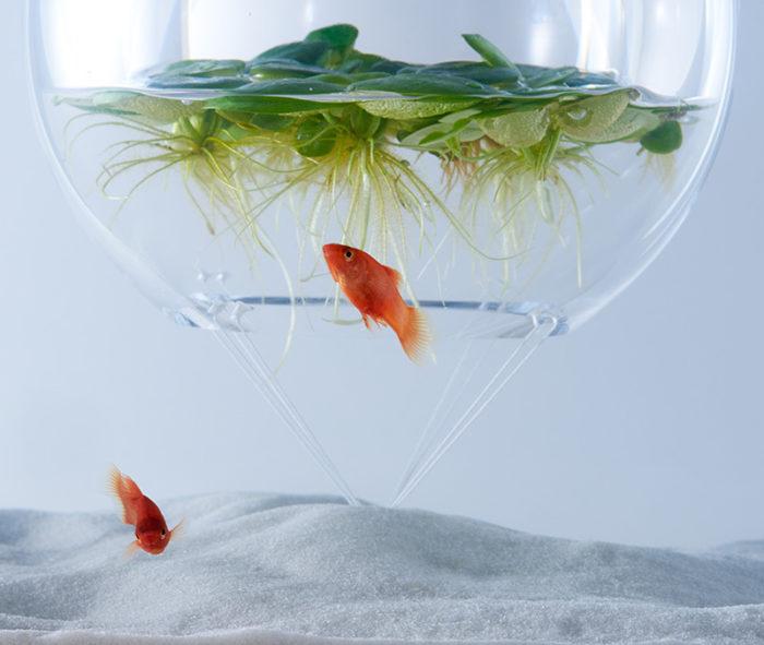 waterscape-acquario-capovolto-alghe-piante-pesci-haruka-misawa-9