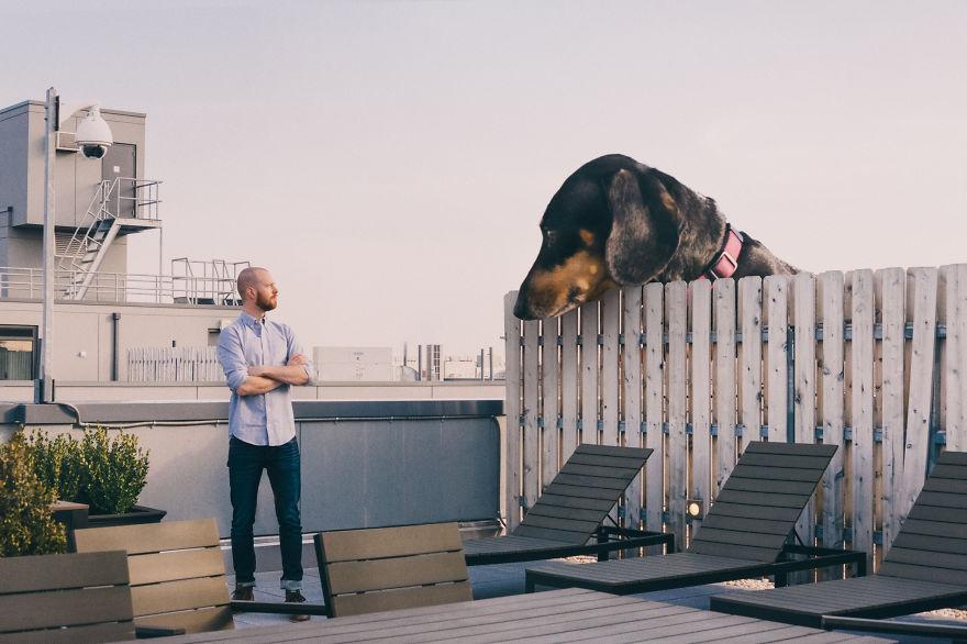 Un bassotto gigante si trasferisce a brooklyn keblog for Divano gigante