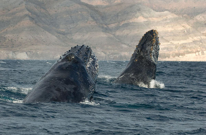 foto-balene-delfini-mare-christopher-swann-03