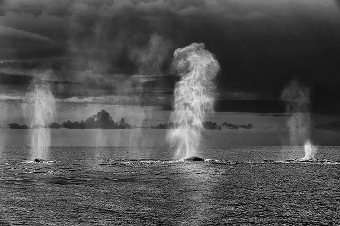 foto-balene-delfini-mare-christopher-swann-04
