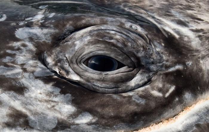 foto-balene-delfini-mare-christopher-swann-05