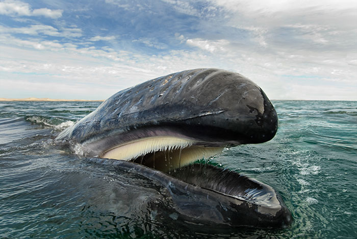 foto-balene-delfini-mare-christopher-swann-07
