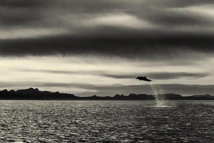 foto-balene-delfini-mare-christopher-swann-08
