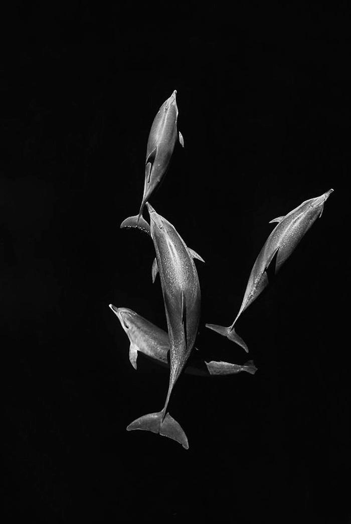 foto-balene-delfini-mare-christopher-swann-11