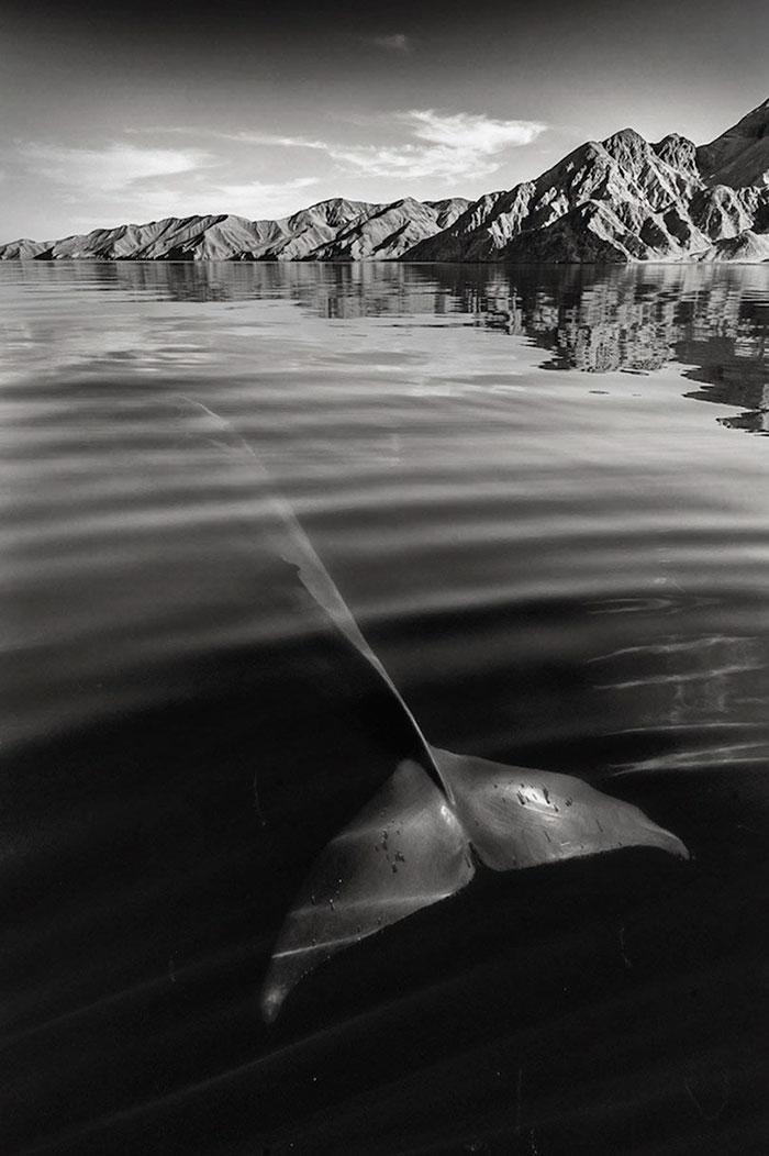 foto-balene-delfini-mare-christopher-swann-12