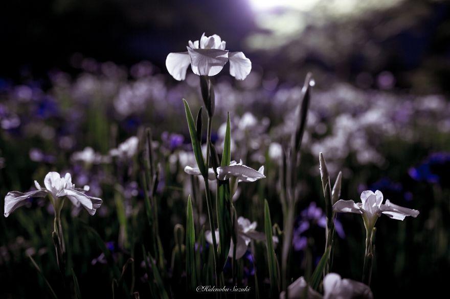 foto-stagione-piogge-giappone-sembrano-dipinti-hidenobu-suzuki-01