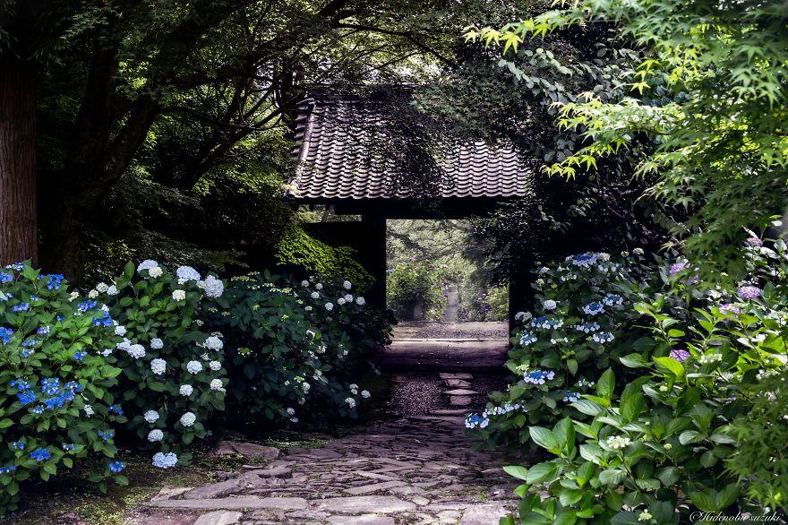 foto-stagione-piogge-giappone-sembrano-dipinti-hidenobu-suzuki-04