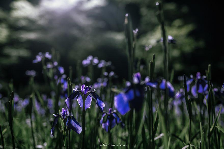 foto-stagione-piogge-giappone-sembrano-dipinti-hidenobu-suzuki-06