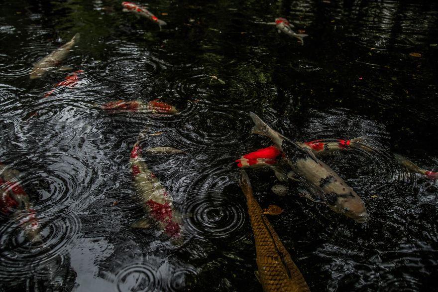 foto-stagione-piogge-giappone-sembrano-dipinti-hidenobu-suzuki-09