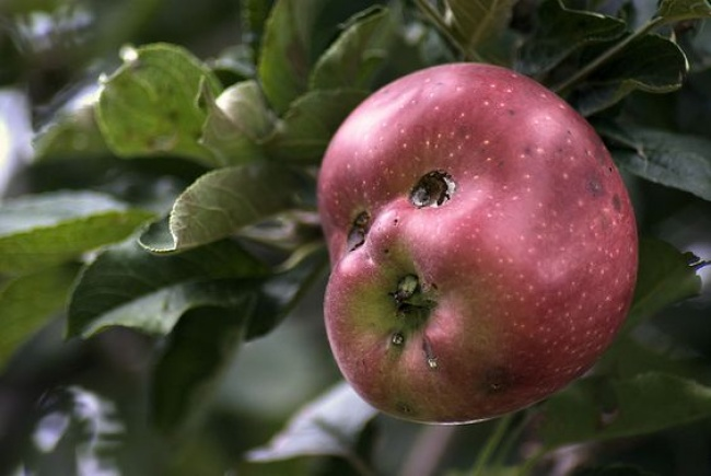 frutta-verdure-strane-forme-illusioni-ottiche-03