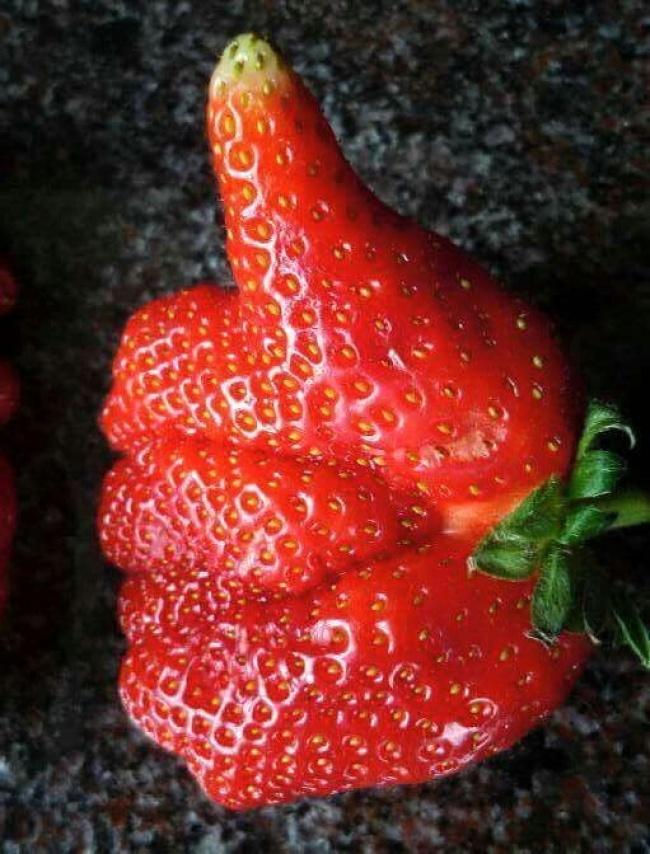 frutta-verdure-strane-forme-illusioni-ottiche-05