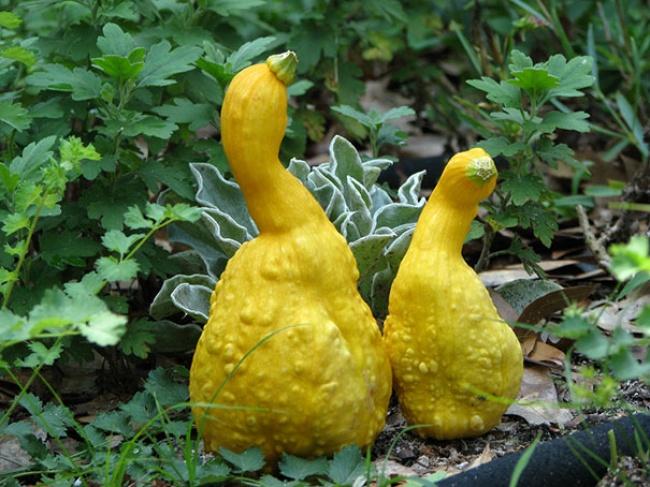 frutta-verdure-strane-forme-illusioni-ottiche-11
