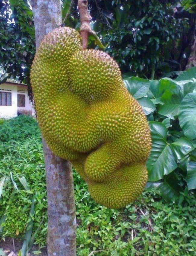 frutta-verdure-strane-forme-illusioni-ottiche-14